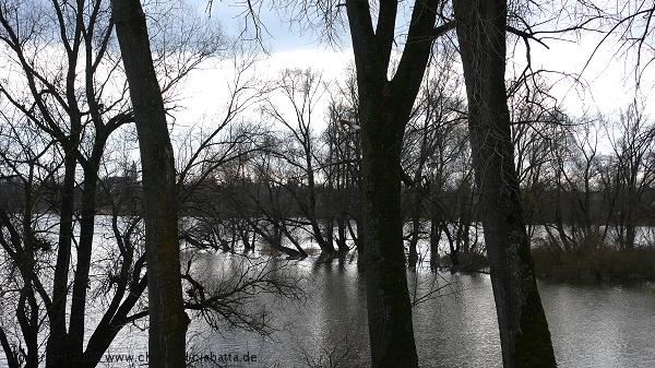DonaubogenbuergerP1030339